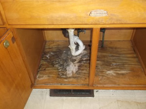 household mold three common mold types mold awareness