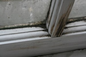 Black Mold - Window