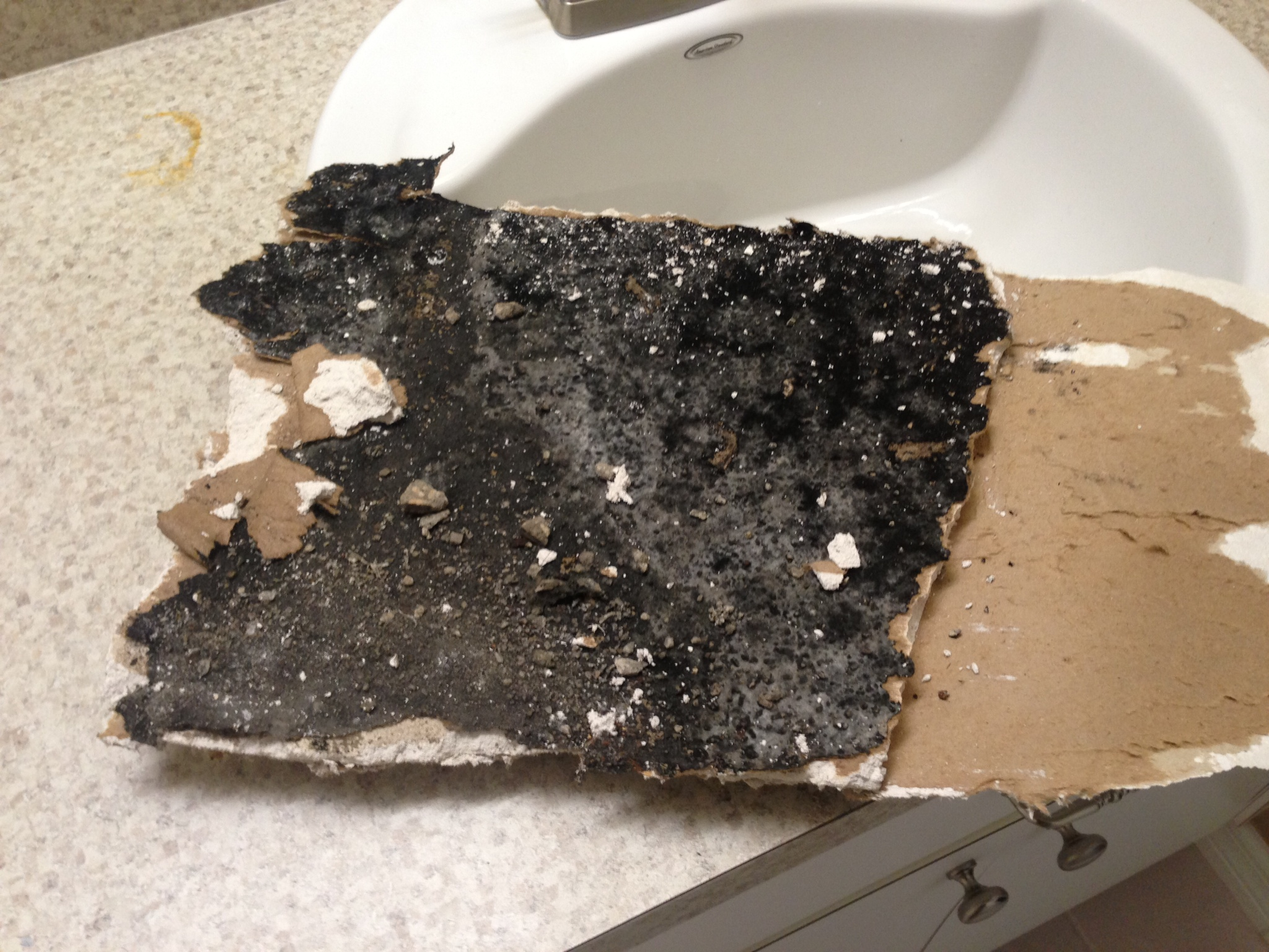 Black Mold In Walls black mold - is it toxic or non-toxic? | mold awareness
